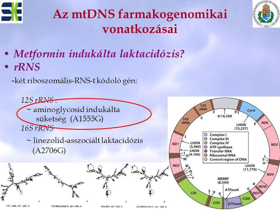 Az mtDNS farmakogenomikai vonatkozásai Metformin indukálta laktacidózis? Metformin indukálta laktacidózis? rRNS rRNS - két riboszomális-RNS-t kódoló g