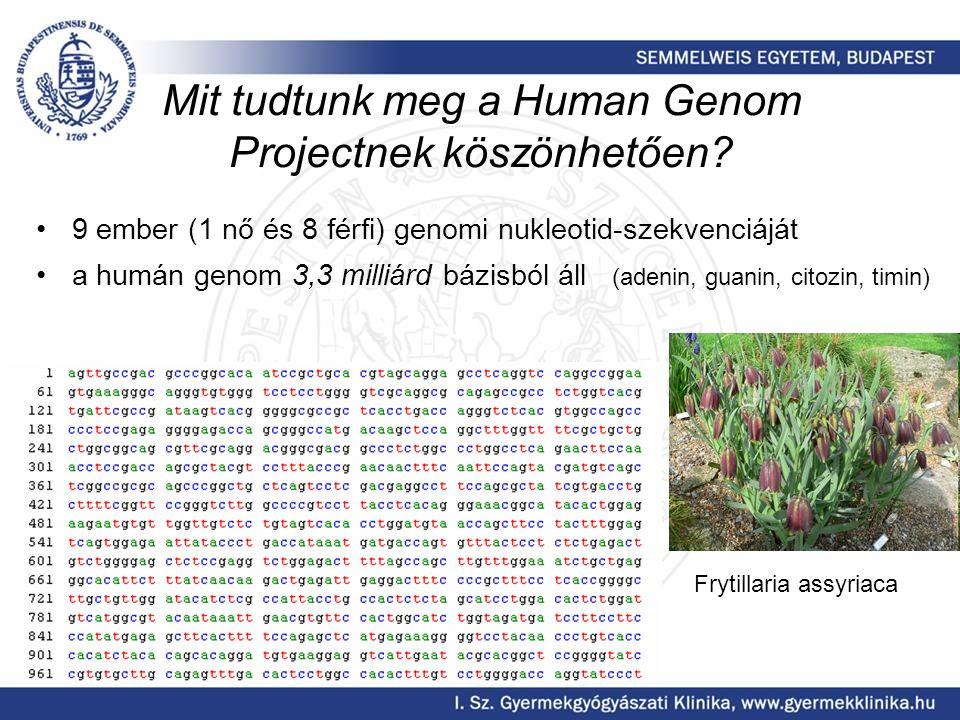 Mit tudtunk meg a Human Genom Projectnek köszönhetően? 9 ember (1 nő és 8 férfi) genomi nukleotid-szekvenciáját a humán genom 3,3 milliárd bázisból ál