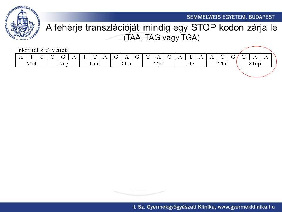 A fehérje transzlációját mindig egy STOP kodon zárja le (TAA, TAG vagy TGA)