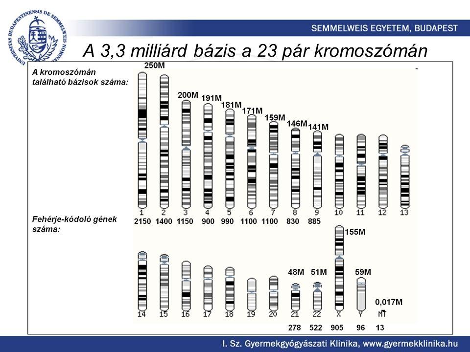 Neuroblastoma A 3.leggyakoribb gyermekkori malignitás.