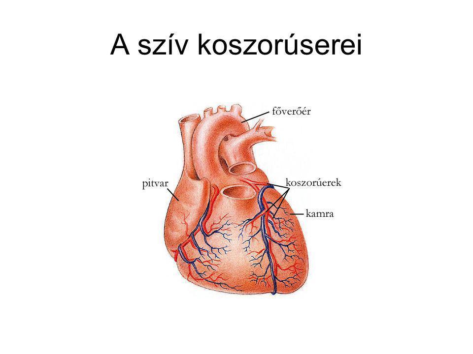 A szív koszorúserei
