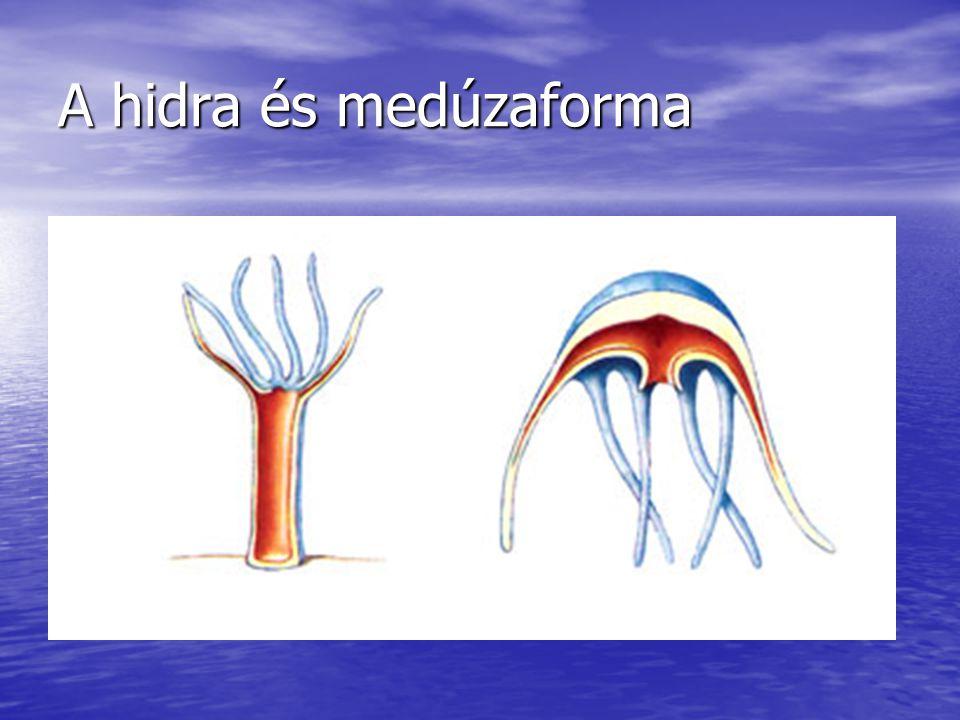 A hidra és medúzaforma