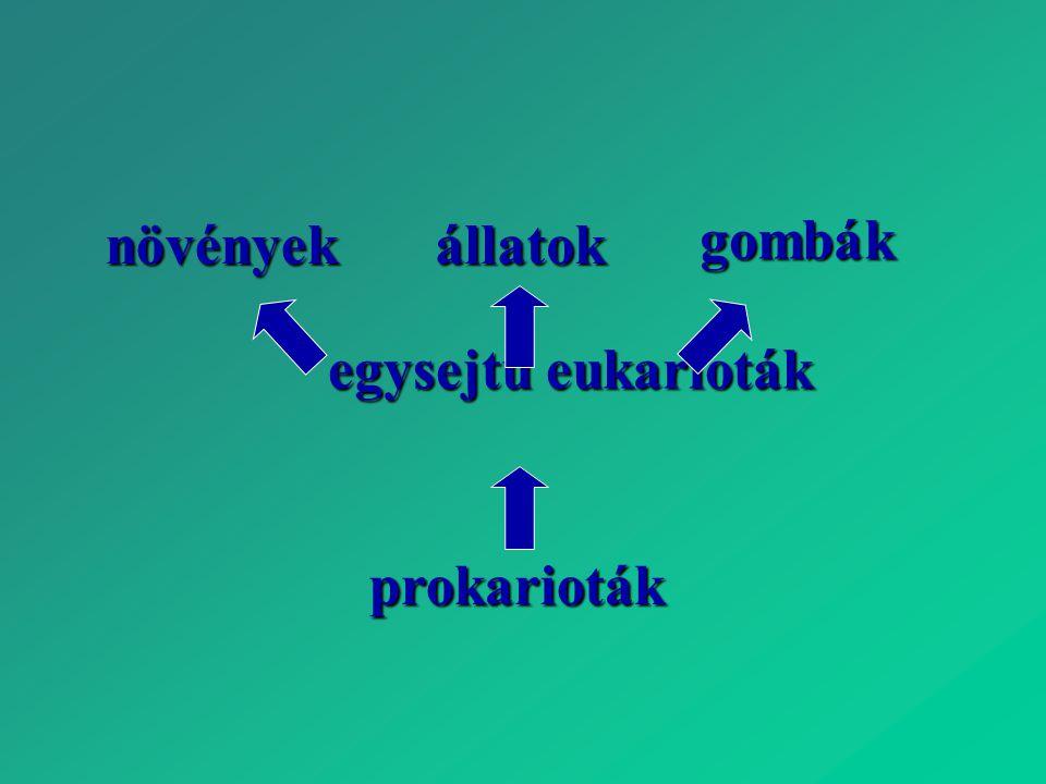 prokarioták egysejtű eukarioták növényekállatok gombák