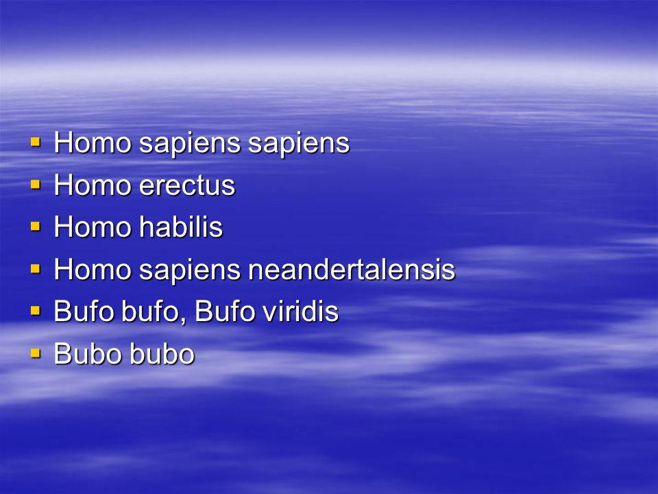  Homo sapiens sapiens  Homo erectus  Homo habilis  Homo sapiens neandertalensis  Bufo bufo, Bufo viridis  Bubo bubo
