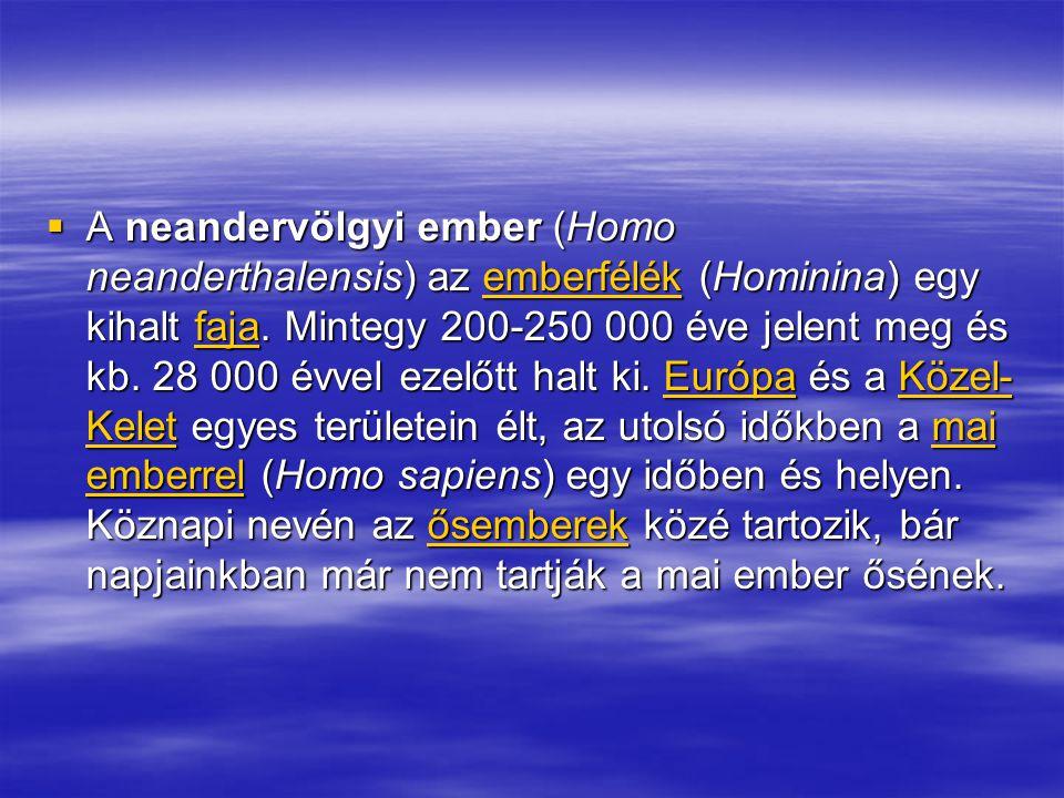 A neandervölgyi ember (Homo neanderthalensis) az emberfélék (Hominina) egy kihalt faja.