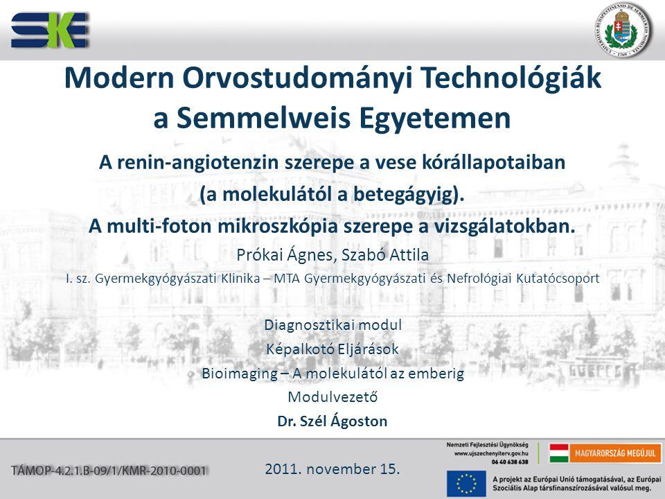 Modern Orvostudományi Technológiák a Semmelweis Egyetemen A renin-angiotenzin szerepe a vese kórállapotaiban (a molekulától a betegágyig). A multi-fot