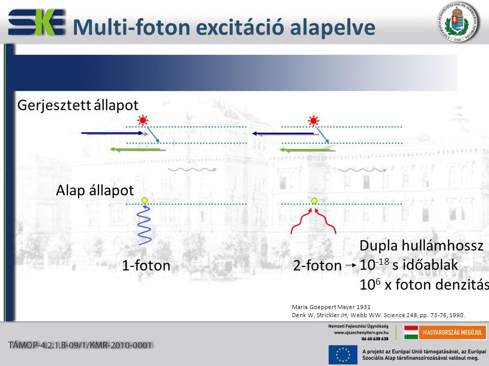 Multi-foton excitáció alapelve 1-foton Alap állapot Gerjesztett állapot 2-foton Dupla hullámhossz 10 -18 s időablak 10 6 x foton denzitás Maria Goeppe