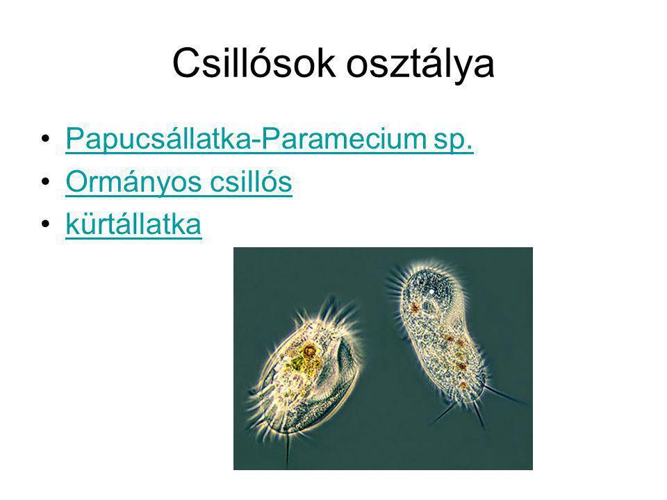 Paramecium részei