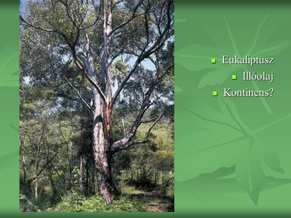 Eukaliptusz Eukaliptusz Illóolaj Illóolaj Kontinens? Kontinens?