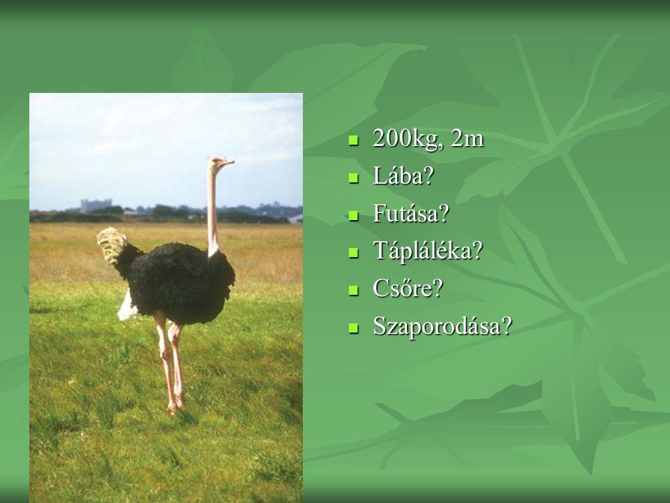 200kg, 2m 200kg, 2m Lába? Lába? Futása? Futása? Tápláléka? Tápláléka? Csőre? Csőre? Szaporodása? Szaporodása?