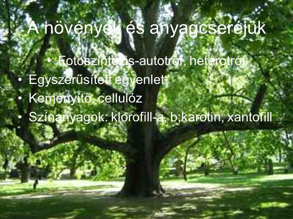 A növények és anyagcseréjük Fotoszintézis-autotróf, heterotróf Egyszerűsített egyenlet Keményítő, cellulóz Színanyagok: klorofill-a, b;karotin, xantofill