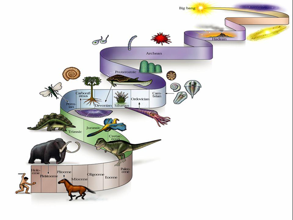 Kitaibel Pál-sok növény-és állatfaj, 1.földrengéstérkép