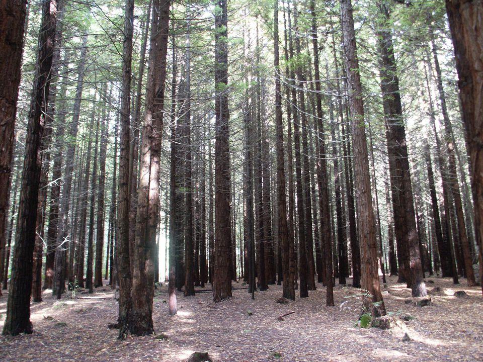Közel-Kelet Mivel nagyon száraz területek tartoznak ide, az erdészet csak kis szeletet foglal el a gazdaságban.
