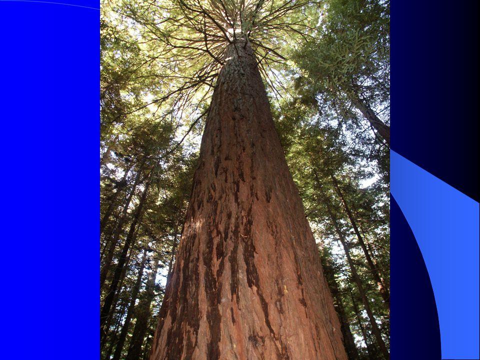 Észak-Amerika Jelentős az erdőterület, jól fejlettek az erdészeti intézmények.