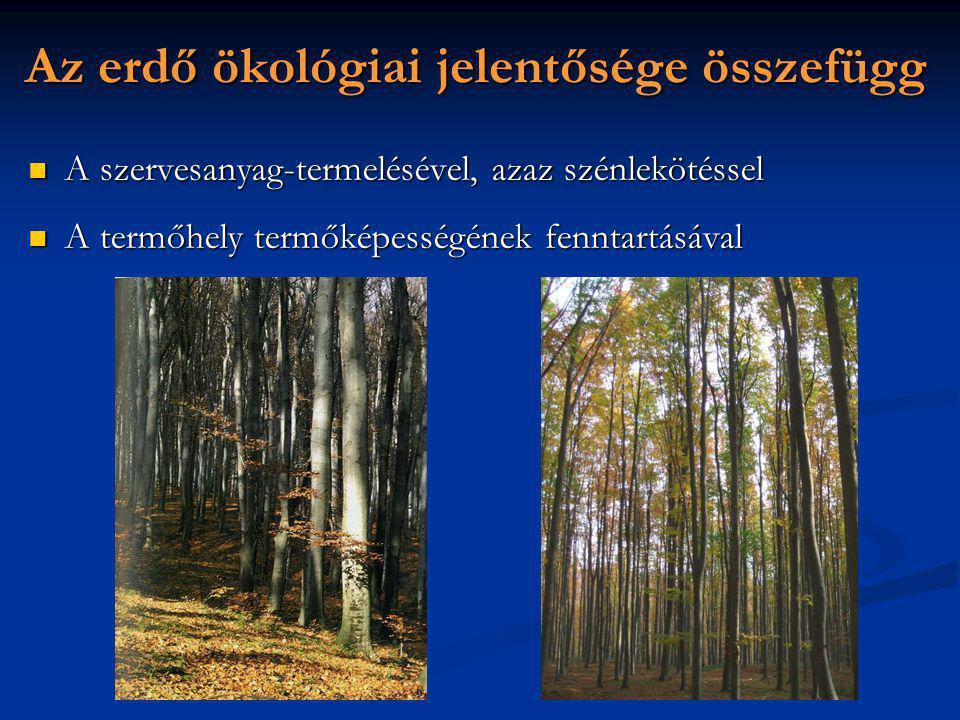 Az erdő ökológiai jelentősége összefügg A szervesanyag-termelésével, azaz szénlekötéssel A szervesanyag-termelésével, azaz szénlekötéssel A termőhely