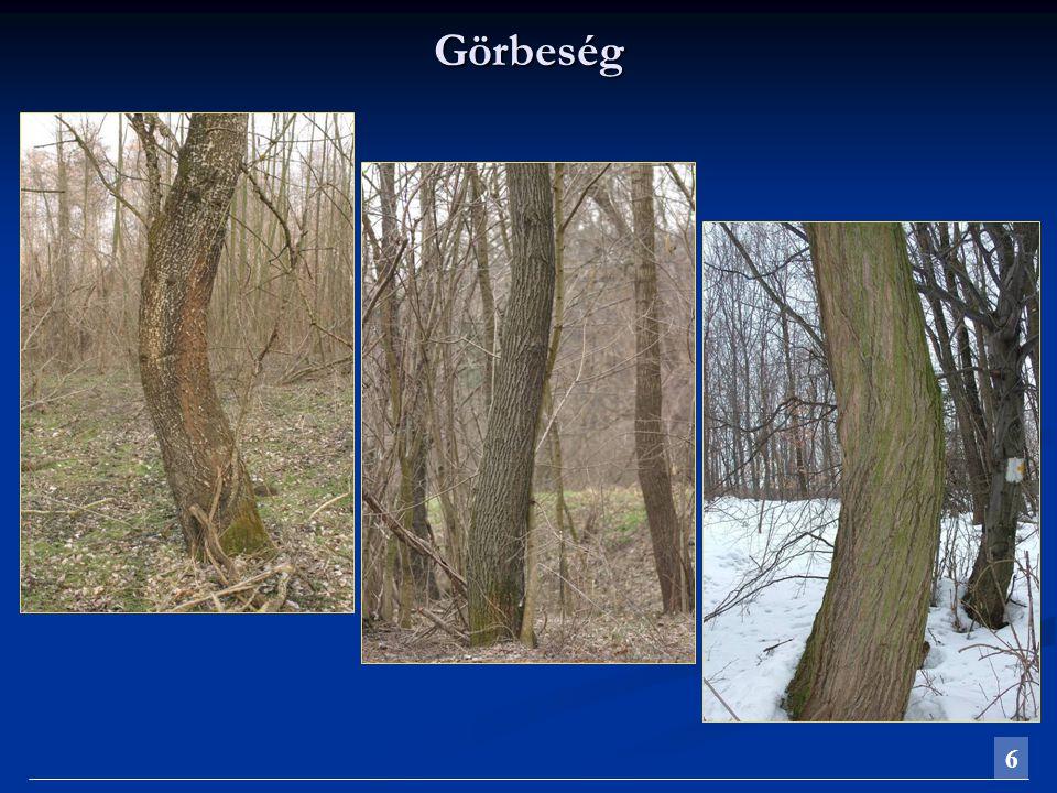Sudarlósság Az élő fák növekedési sajátosságaiból adódóan a törzs átmérője a csúcs felé fokozatosan csökken, tehát gyakorlatilag csonka kúp alakú (sudarlós).Az élő fák növekedési sajátosságaiból adódóan a törzs átmérője a csúcs felé fokozatosan csökken, tehát gyakorlatilag csonka kúp alakú (sudarlós).