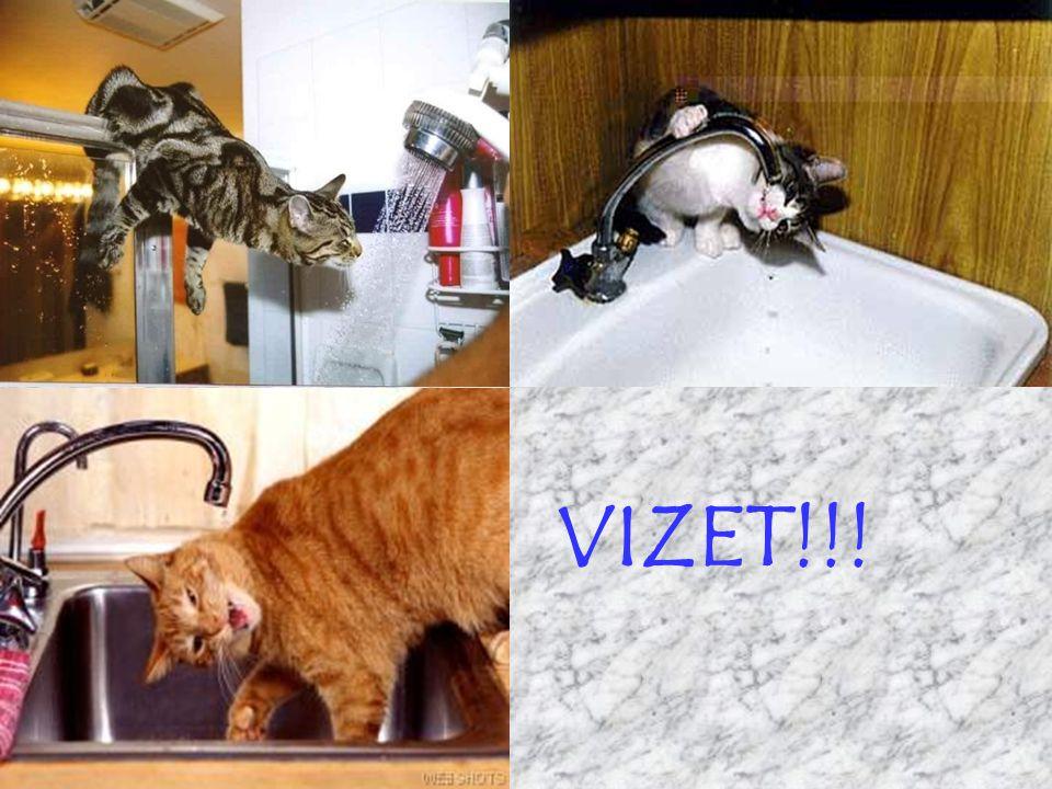 VIZET!