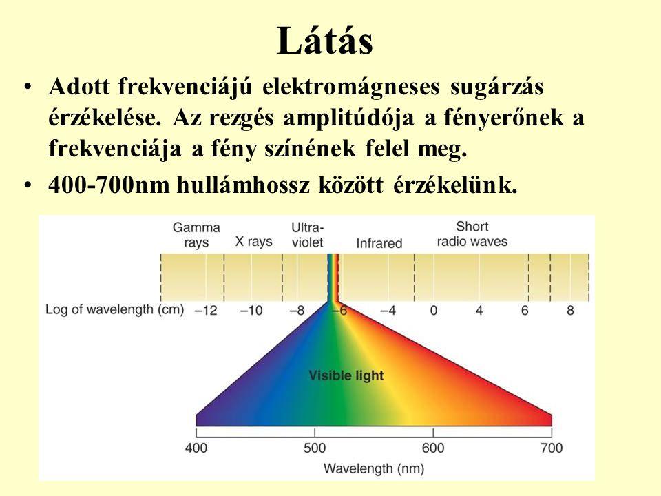 Látás Adott frekvenciájú elektromágneses sugárzás érzékelése. Az rezgés amplitúdója a fényerőnek a frekvenciája a fény színének felel meg. 400-700nm h