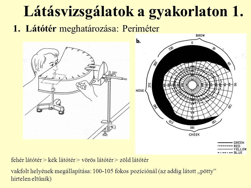1.Látótér meghatározása: Periméter Látásvizsgálatok a gyakorlaton 1. fehér látótér > kék látótér > vörös látótér > zöld látótér vakfolt helyének megál