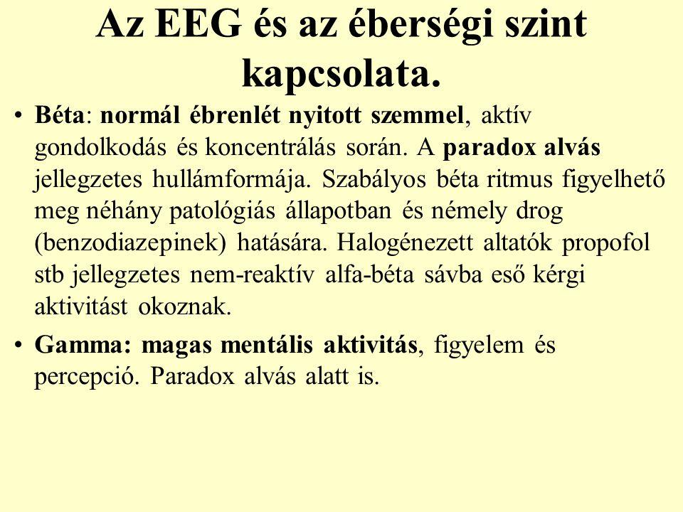 Az EEG és az éberségi szint kapcsolata. Béta: normál ébrenlét nyitott szemmel, aktív gondolkodás és koncentrálás során. A paradox alvás jellegzetes hu