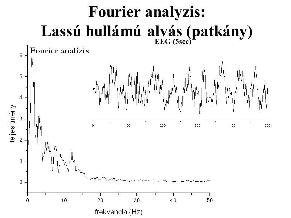 Fourier analyzis: Lassú hullámú alvás (patkány) EEG (5sec)