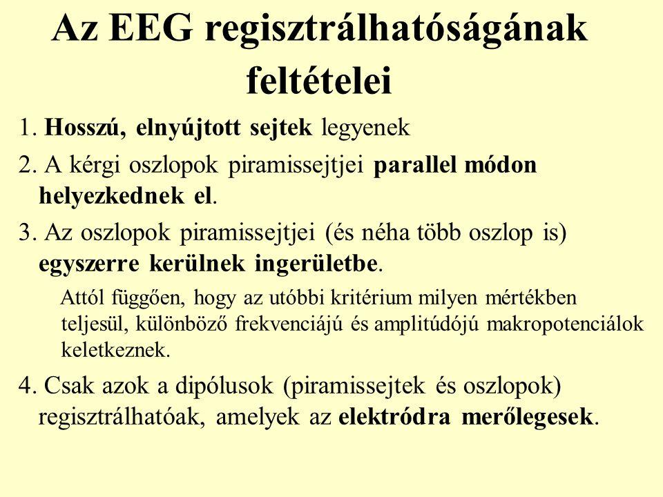 Fourier analyzis: Ébrenléti theta ritmus mozgás közben (patkány) EEG (5sec)