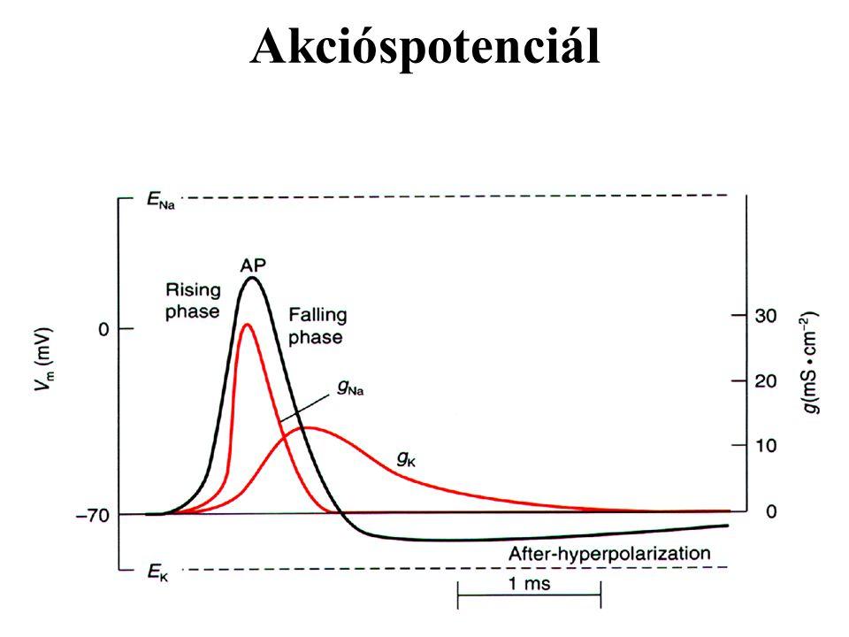 8 hónapos gyermek normál EEG aktivitás-mintázata 1: éber állapot (a centrális elvezetéseknél 4-5 Hz-es teta aktivitással) 2: szendergés 3: alvás (aszinkron, jellegzetes orsó aktivitás is megfigyelhető)