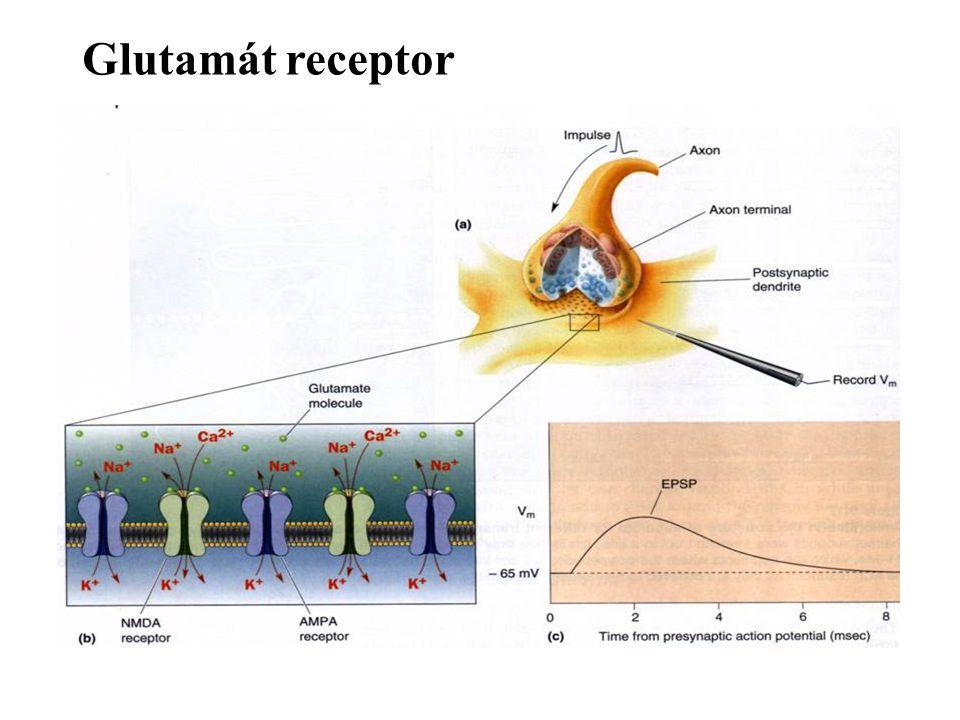 Műtermékek I 1-blink: pislogás, 2-EO: szemnyitás, 3-EC: szembecsukás, 4-EM: ritmikus lassú szemmozgás, 5-EM: szakkadikus szemmozgás