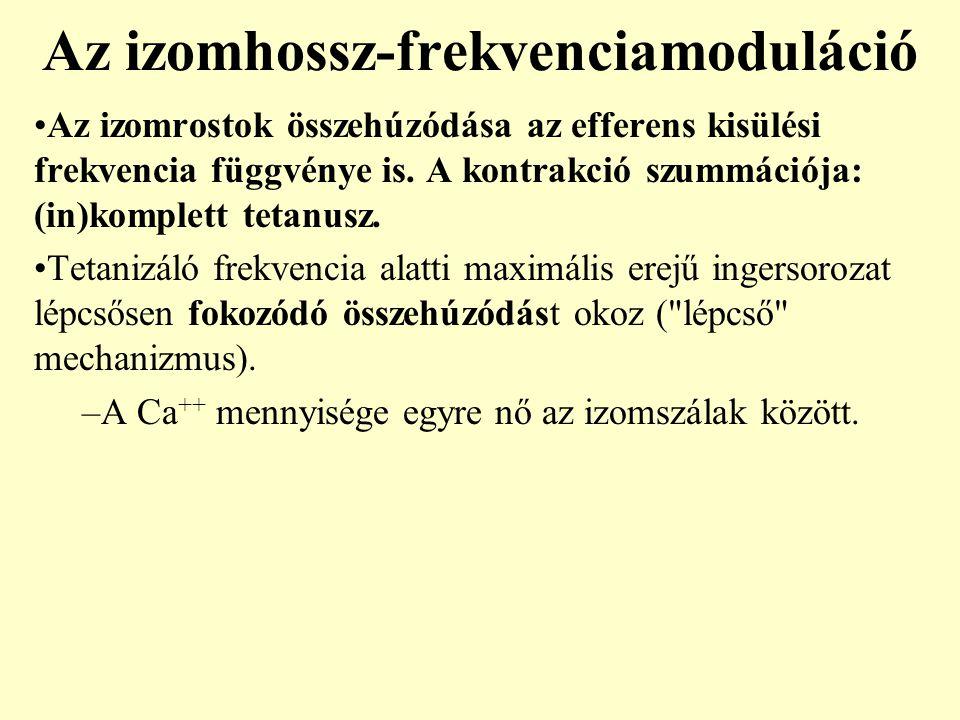 Az izomhossz-frekvenciamoduláció Az izomrostok összehúzódása az efferens kisülési frekvencia függvénye is. A kontrakció szummációja: (in)komplett teta