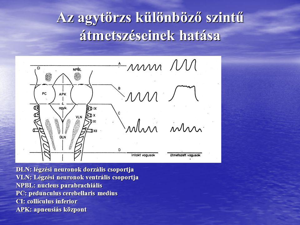 A légzőközpont működését befolyásoló ingerek Kémiai szabályozás Kémiai szabályozás - CO 2 a CSF és az agyi intersticiális folyadék H + koncentrációja útján - CO 2 a CSF és az agyi intersticiális folyadék H + koncentrációja útján - O 2, H + glomus caroticum és glomus aorticum útján - O 2, H + glomus caroticum és glomus aorticum útján Nem kémiai szabályozás Nem kémiai szabályozás - Afferensek a hídból, a hypothalamusból, a limbikus rendszerből - Afferensek a hídból, a hypothalamusból, a limbikus rendszerből - Proprioceptor afferensek - Proprioceptor afferensek - Tüsszentés, köhögés, nyelés – afferensek a garatból, légcsőből, hörgőkből - Tüsszentés, köhögés, nyelés – afferensek a garatból, légcsőből, hörgőkből - Vagus-afferensek a tüdő mechanoreceptoraiból - Vagus-afferensek a tüdő mechanoreceptoraiból - Artériás, pitvari, kamrai baroreceptor-afferensek - Artériás, pitvari, kamrai baroreceptor-afferensek
