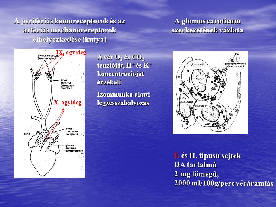 A centrális kemoreceptorzónák elhelyezkedése és működése gyorsan, nagy érzékenységgel érzékelik a vér CO 2 tenziójának változásait, gyorsan, nagy érzékenységgel érzékelik a vér CO 2 tenziójának változásait, hosszú távon adaptálódnak a magas CO 2 koncentrációhoz.