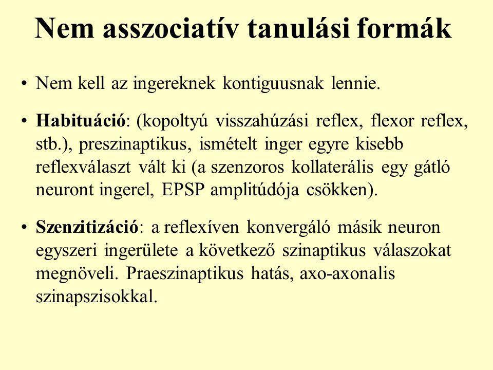 Nem asszociatív tanulási formák Nem kell az ingereknek kontiguusnak lennie. Habituáció: (kopoltyú visszahúzási reflex, flexor reflex, stb.), preszinap