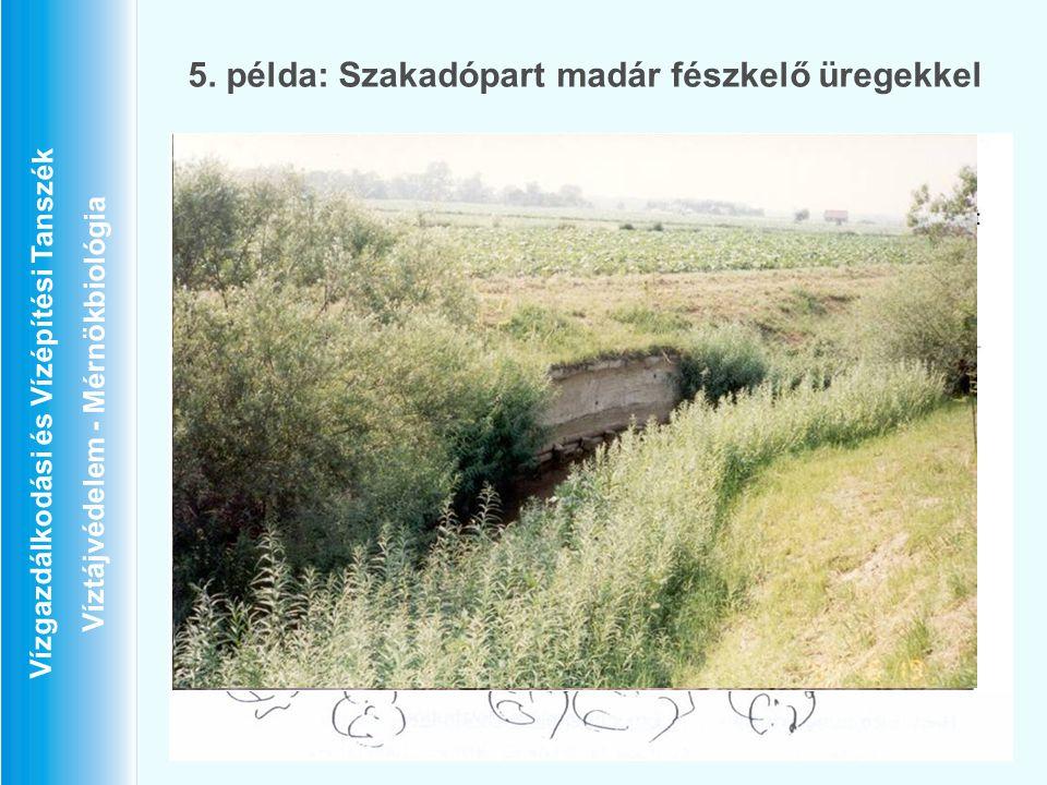 Vízgazdálkodási és Vízépítési Tanszék Víztájvédelem - Mérnökbiológia 5. példa: Szakadópart madár fészkelő üregekkel