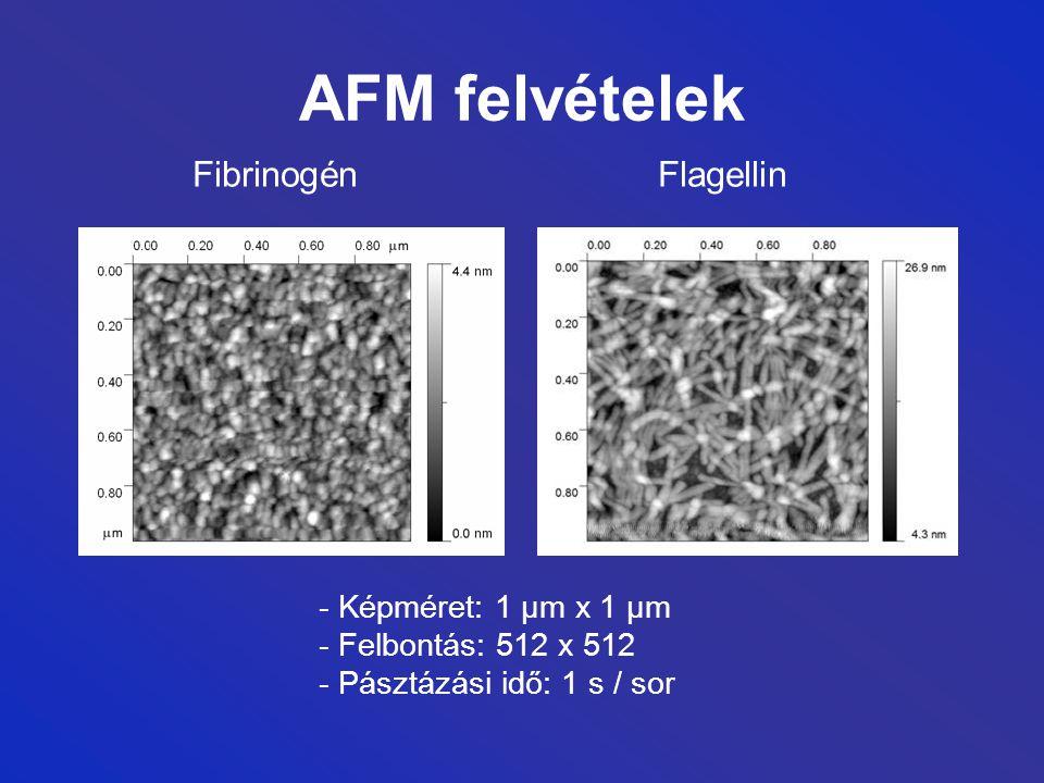 AFM felvételek Fibrinogén Flagellin - Képméret: 1 µm x 1 µm - Felbontás: 512 x 512 - Pásztázási idő: 1 s / sor