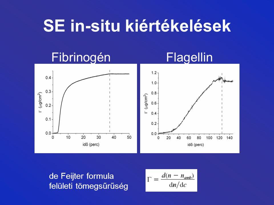 SE in-situ kiértékelések Fibrinogén Flagellin de Feijter formula felületi tömegsűrűség