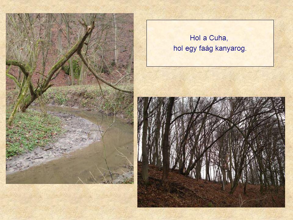 Hol a Cuha, hol egy faág kanyarog.