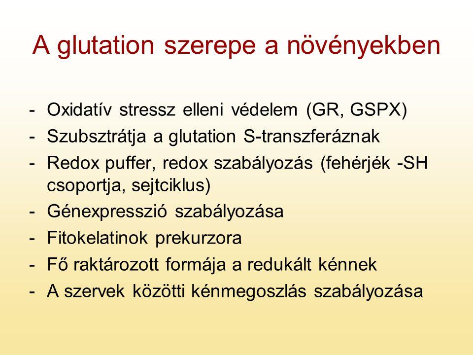 A glutation szerepe a növényekben -Oxidatív stressz elleni védelem (GR, GSPX) -Szubsztrátja a glutation S-transzferáznak -Redox puffer, redox szabályo