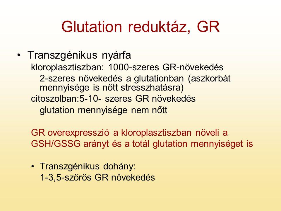 Glutation reduktáz, GR Transzgénikus nyárfa kloroplasztiszban: 1000-szeres GR-növekedés 2-szeres növekedés a glutationban (aszkorbát mennyisége is nőt