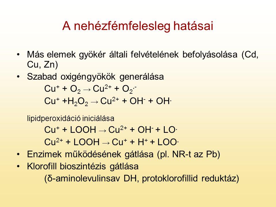 A nehézfémfelesleg hatásai Más elemek gyökér általi felvételének befolyásolása (Cd, Cu, Zn) Szabad oxigéngyökök generálása Cu + + O 2 → Cu 2+ + O 2.-