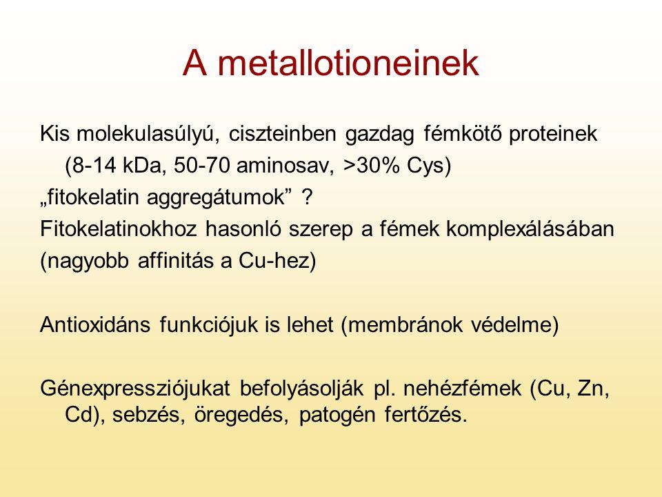 """A metallotioneinek Kis molekulasúlyú, ciszteinben gazdag fémkötő proteinek (8-14 kDa, 50-70 aminosav, >30% Cys) """"fitokelatin aggregátumok"""" ? Fitokelat"""