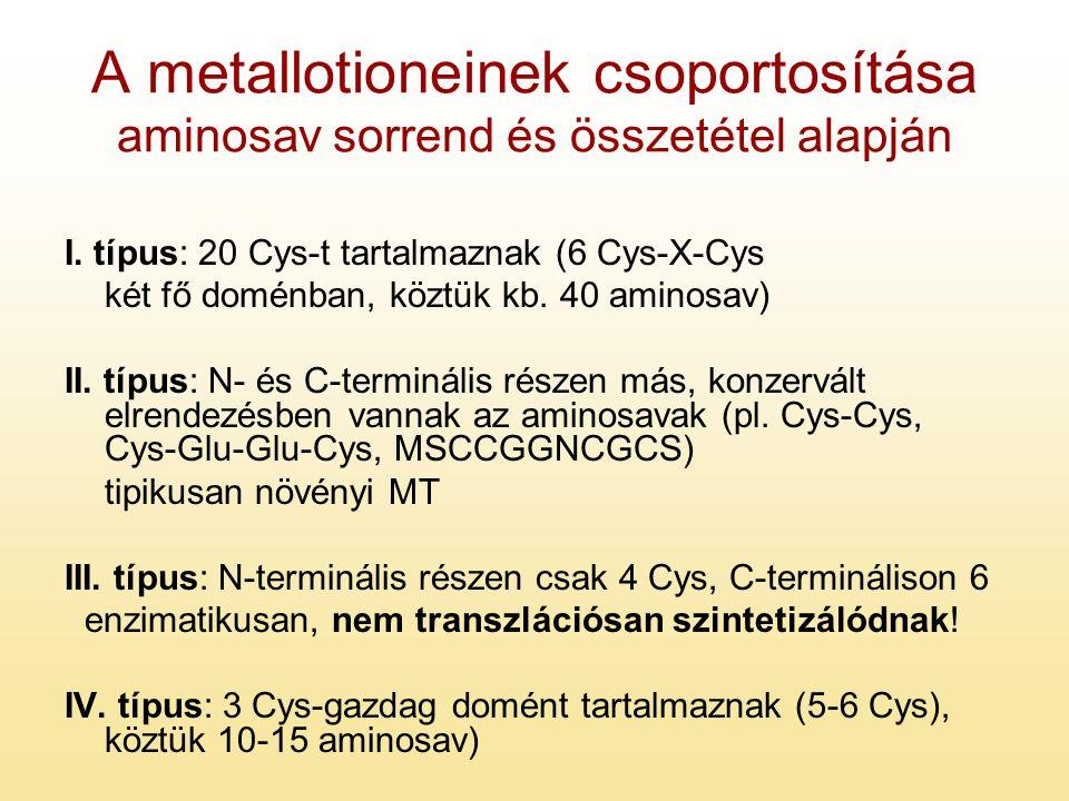 A metallotioneinek csoportosítása aminosav sorrend és összetétel alapján I. típus: 20 Cys-t tartalmaznak (6 Cys-X-Cys két fő doménban, köztük kb. 40 a