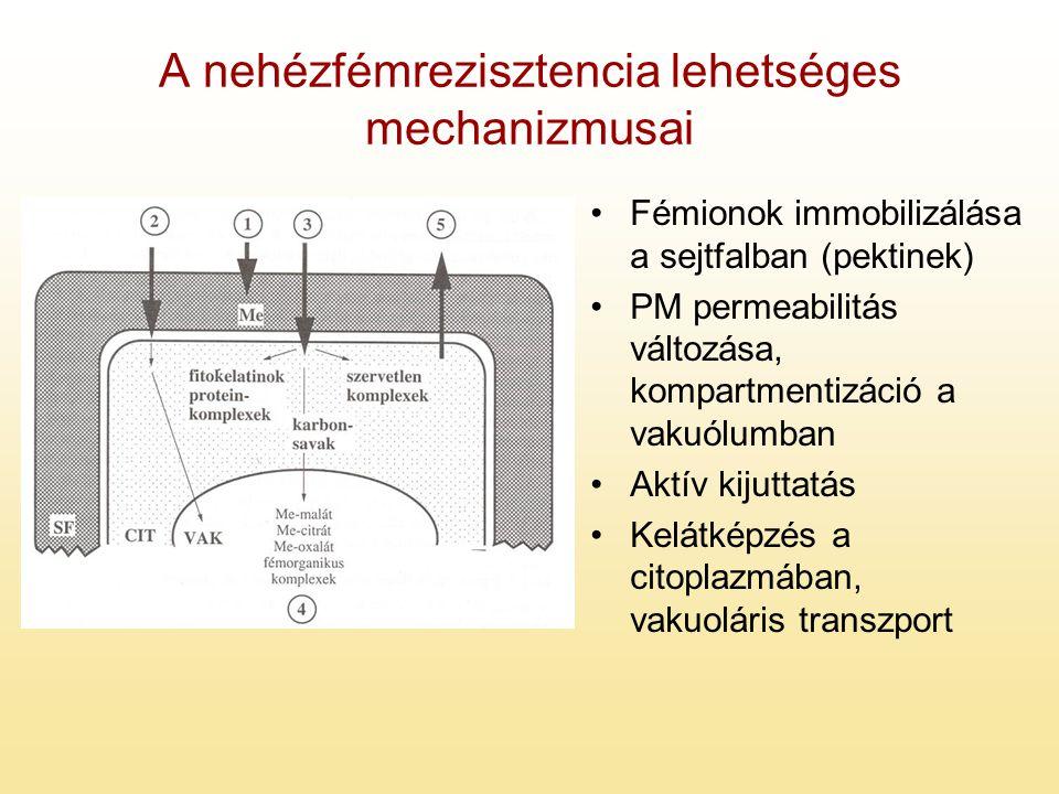 A nehézfémrezisztencia lehetséges mechanizmusai Fémionok immobilizálása a sejtfalban (pektinek) PM permeabilitás változása, kompartmentizáció a vakuól