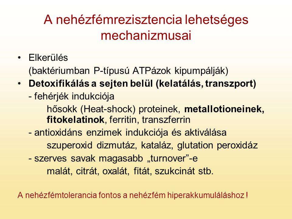 A nehézfémrezisztencia lehetséges mechanizmusai Elkerülés (baktériumban P-típusú ATPázok kipumpálják) Detoxifikálás a sejten belül (kelatálás, transzp