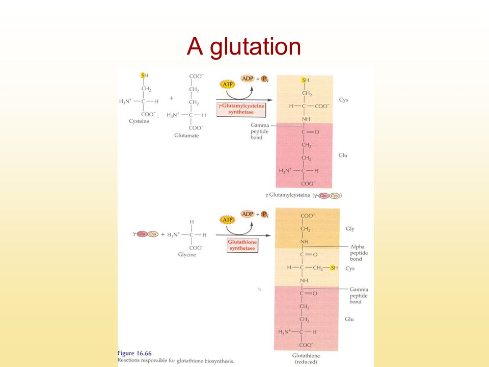 A glutation