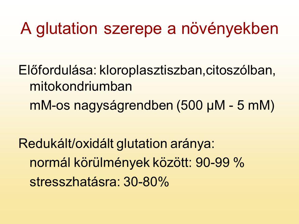 A glutation szerepe a növényekben Előfordulása: kloroplasztiszban,citoszólban, mitokondriumban mM-os nagyságrendben (500 µM - 5 mM) Redukált/oxidált g