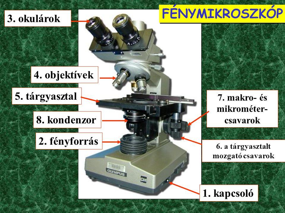 Phaseolus vulgaris (veteménybab) / Fabaceae (pillangósvirágúak) magból kaparék egyszerű koncentrikus keményítőszemek