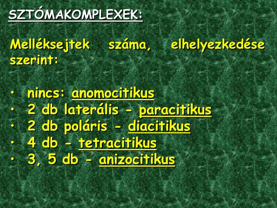 Melléksejtek száma, elhelyezkedése szerint: nincs: anomocitikus 2 db laterális - paracitikus 2 db poláris - diacitikus 4 db - tetracitikus 3, 5 db - anizocitikus Melléksejtek száma, elhelyezkedése szerint: nincs: anomocitikus 2 db laterális - paracitikus 2 db poláris - diacitikus 4 db - tetracitikus 3, 5 db - anizocitikus SZTÓMAKOMPLEXEK: