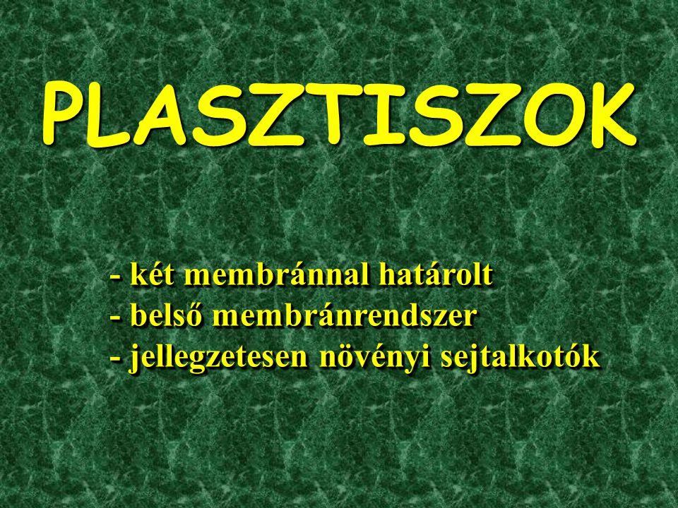 - két membránnal határolt - belső membránrendszer - jellegzetesen növényi sejtalkotók - két membránnal határolt - belső membránrendszer - jellegzetesen növényi sejtalkotók PLASZTISZOK