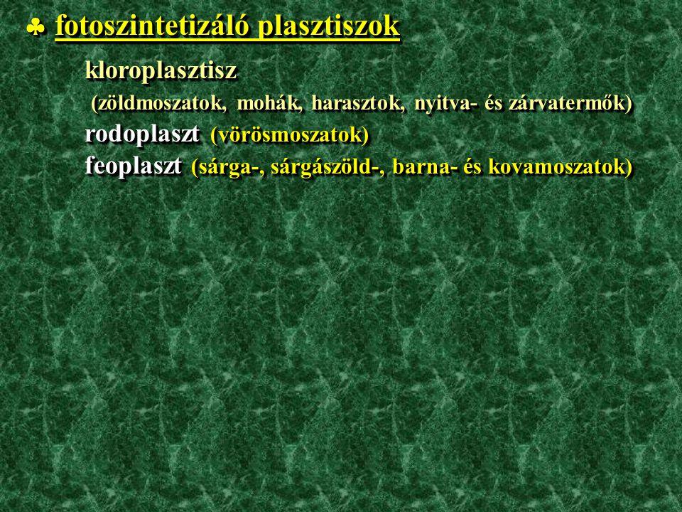  fotoszintetizáló plasztiszok kloroplasztisz kloroplasztisz (zöldmoszatok, mohák, harasztok, nyitva- és zárvatermők) (zöldmoszatok, mohák, harasztok, nyitva- és zárvatermők) rodoplaszt (vörösmoszatok) rodoplaszt (vörösmoszatok) feoplaszt (sárga-, sárgászöld-, barna- és kovamoszatok) feoplaszt (sárga-, sárgászöld-, barna- és kovamoszatok)  fotoszintetizáló plasztiszok kloroplasztisz kloroplasztisz (zöldmoszatok, mohák, harasztok, nyitva- és zárvatermők) (zöldmoszatok, mohák, harasztok, nyitva- és zárvatermők) rodoplaszt (vörösmoszatok) rodoplaszt (vörösmoszatok) feoplaszt (sárga-, sárgászöld-, barna- és kovamoszatok) feoplaszt (sárga-, sárgászöld-, barna- és kovamoszatok)