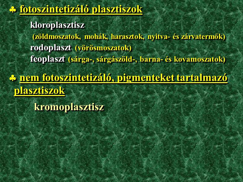 Kromoplasztiszok: reproduktív szervekben pl.